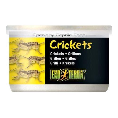 Exo Terra 1.2oz Crickets