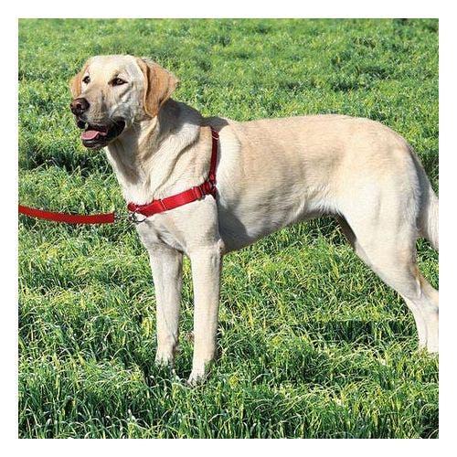 Halti walking harness 16-24 inch dog