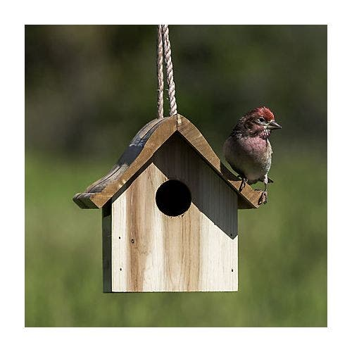 Perky pet cedar wren house feeder bird