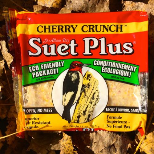 Suet Plus cherry crunch  suet plus bird