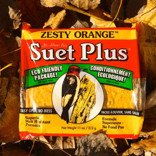 Suet Plus zesty orange suet plus bird